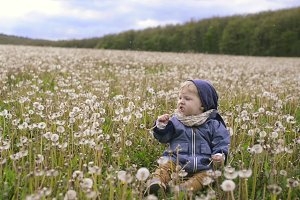 Cute little boy sitting on the ground eating dandelion.