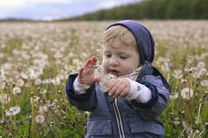 Cute little boy sitting on the ground holding dandelion.