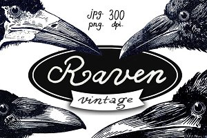 Raven vintage illustrations