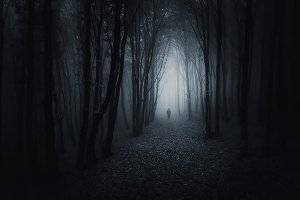 Halloween journey in dark forest
