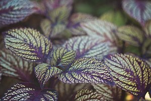 Purple and Green Botanical Plant