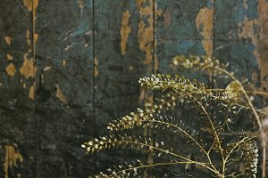 Dried Plant Against Old Door