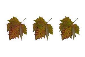 Three autumn