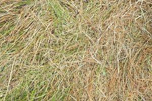 Texture of hay