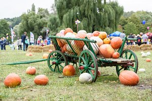 Big pile on pumpkins on a green cart