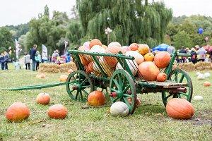 Big pile on pumpkins on a green cart