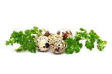 Quail eggs with parsley leaves