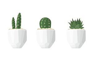 Cactus and succulent illustrations in a flat style isolated on a white background.