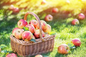 Ripe red apples in the basket