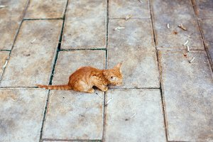 Small street red kitten