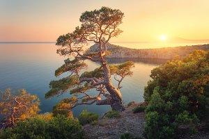 Beautiful tree on the mountain at sunset