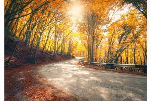 Amazing view with colorful autumn forest with asphalt mountain road
