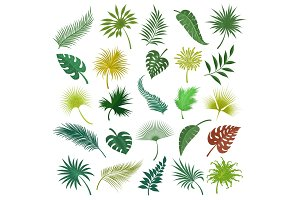 Palm exotic leaves set