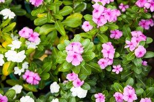 Small flower garden.