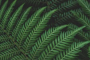 Lush Green Forest Fern Closeup