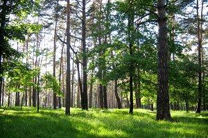 Green picnic