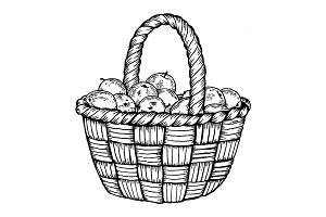 Basket with apples engraving vector illustration