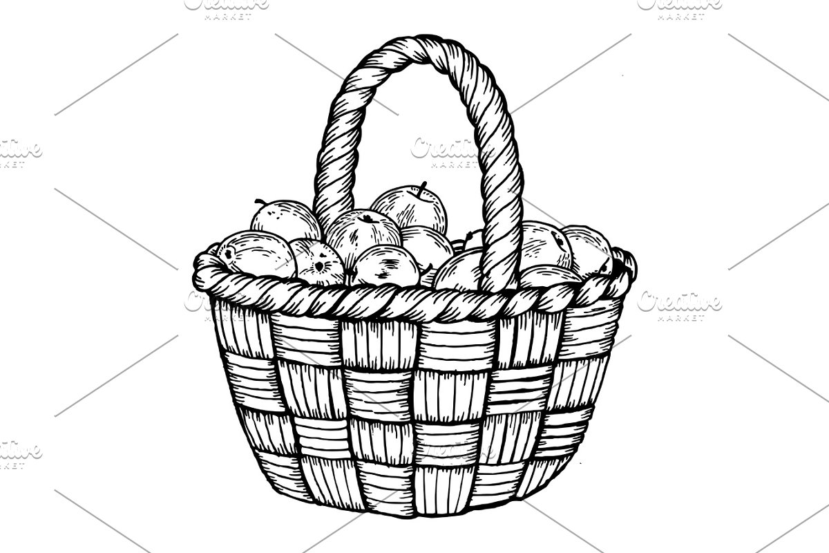 Basket with apples engraving vector illustration in Illustrations