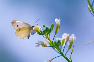 White butterfly against a blue sky