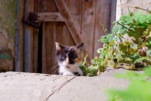 A small kitten