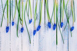 background with muscari flower