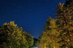 Night road in forest