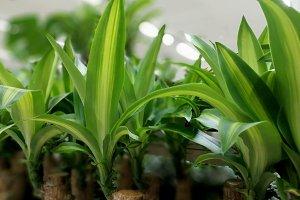 Tropical plants at market