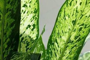 Tropical plant at market