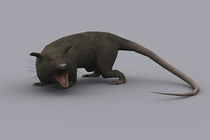 GIANT RAT fbx only
