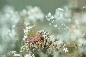 Grasshopper in dream garden