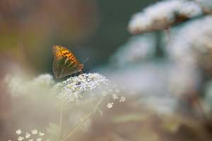 Butterfly on a forest glade
