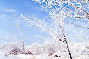 frozen trees with snow and frost