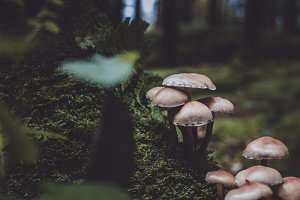Vintage Forest with Mushrooms & Moss