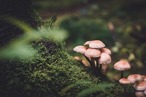 Macro Shot with Mushrooms and Moss