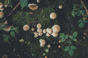 Forest Floor with Mushrooms & Leaves