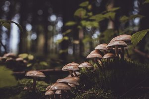 Vintage Background with Mushrooms