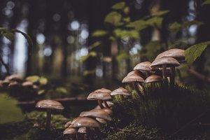 Vintage Background with Mushrooms