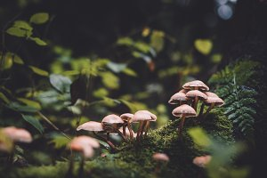 Vintage Forest Scene with Mushrooms