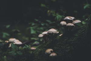 Dark and Moody Mushrooms and Leaves