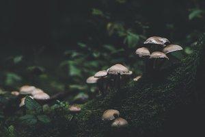 Dark and Moody Mushrooms and Leaves