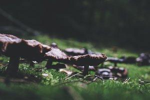 Dark Vintage Scene with Mushrooms