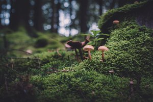 Moody Forest Scene with Mushrooms