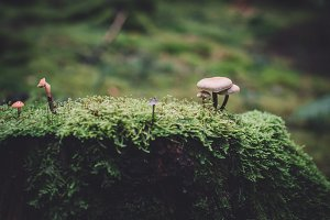 Tree Stump with Moss and Mushrooms