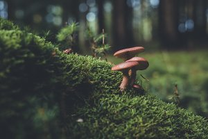 Mushroom on Mossy Forest Floor