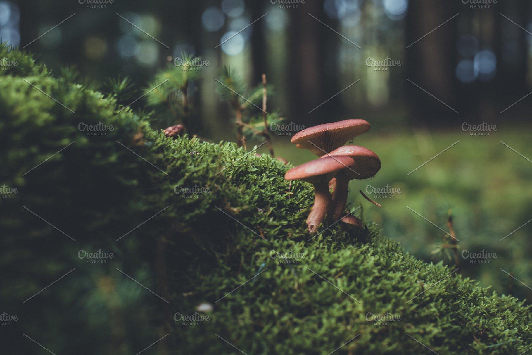 Mushroom on Mossy Forest Floor | High
