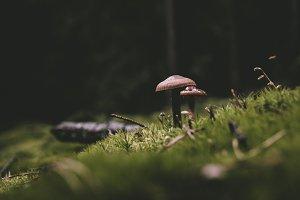 Mushroom in Dark Forest (Background)