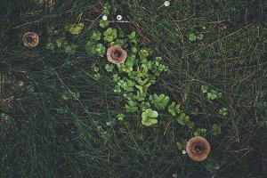 Dark Forest Floor with Moss