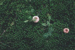Mushrooms on Dark Forest Floor