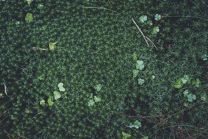 Leaves and Moss on Forest Floor