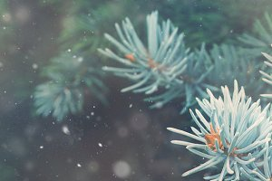 Snowy forest background banner